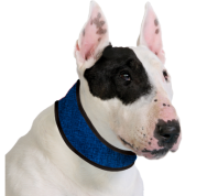 coolingdogcollar_pb_big
