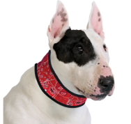 coolingdogcollar_wr_big